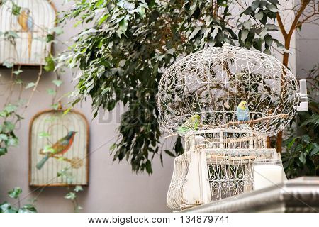 White round retro cage with colorful parrots in the interior.