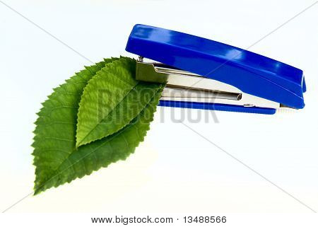 Stapler And Green Leaves, File, Office File