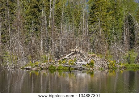 Beaver den lodge along side smooth mirror reflection pond of teton mountains scenic landscape