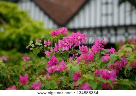 Flowers on Merdeka Square in Kuala Lumpur Malaysia
