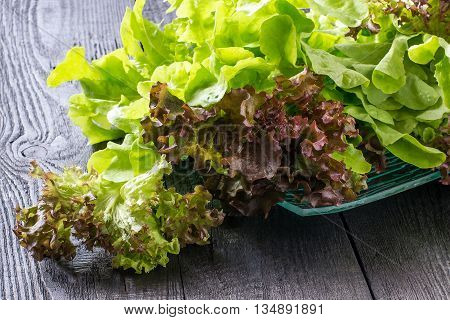 Fresh crispy lettuce and Lollo Rossa. The source of vitamins and minerals detox diet health or vegetarian food concept