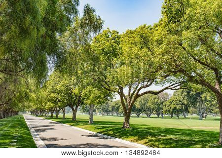 Green Tree Park Lane