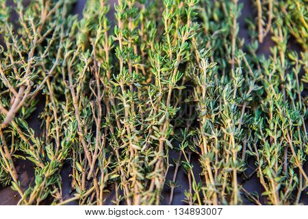 Sprigs of green thyme in colored light.