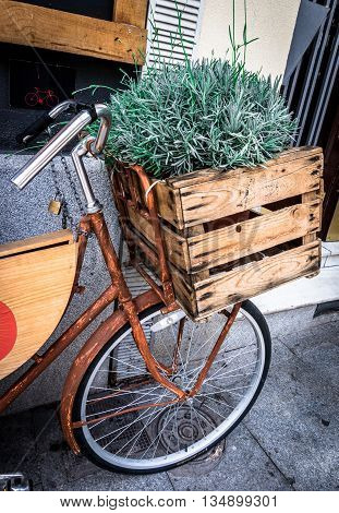 Rosemary in a wooden box on a bicycle, Mercado San Miguel, Madrid, Spain.