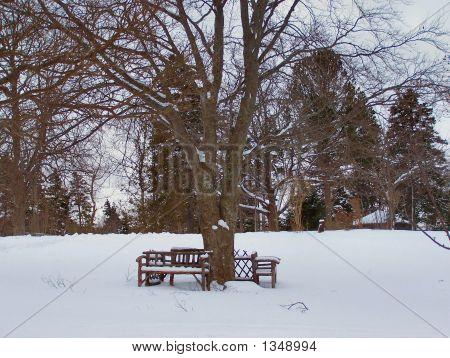 Park Bench Snow