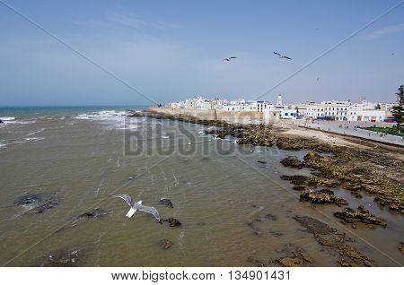 Seagull flying to Essaouira, on Morocco coast