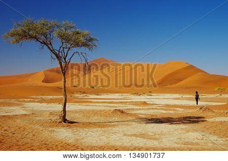 Wandering in the desert of Namib - Naukluft