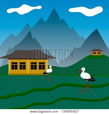 Storks on green rise fields in mountains