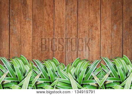 Green plants with old wooden background and texture, stock photo