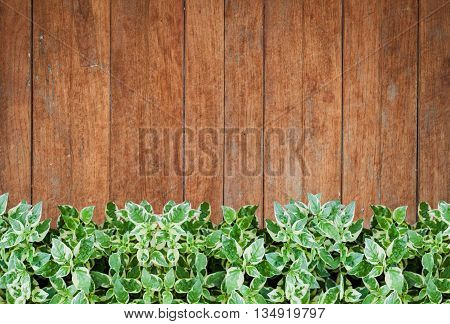 Green plants with old wooden wall background, stock photo