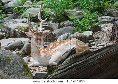 a deer sleeping in a forest during the day