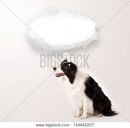 Cute black and white border collie with empty cloud bubble above her head