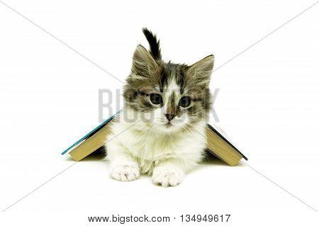 kitten lies under the open book on white background. horizontal photo.