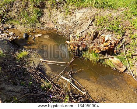 Creek in wild nature after wood exploitationduring sunny day