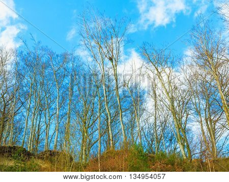 trees on cliff and cloudy blue sky coastline in Gdynia Poland. Nature environment