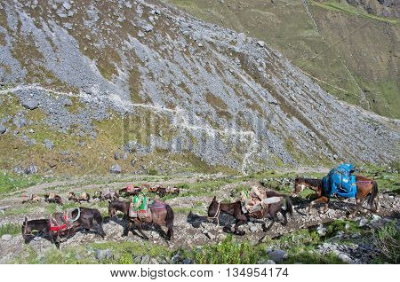 Horses in Andes. Salkantay Trekking Peru South America.