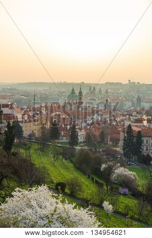 Panorama Of Prague From Petrin Hill With Flowers In Blossom, Prague, Czech Republic