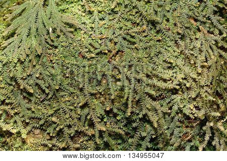 Nature green fern background and texture pattern