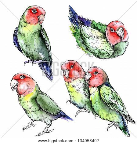 Set of cute funny lovebird parrots. Watercolor style vector illustration