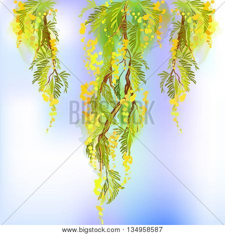 Yellow mimosa spring flowers vertical garland on white background. Hand drawn mimosa floral yellow green border design and mimosa text. Sunny watercolor mimosa sketch background. Vector illustration.