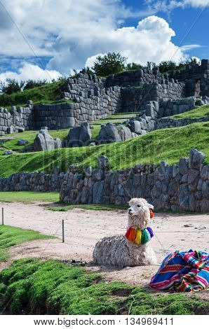 Lama at Sacsayhuaman in Cuzco, Peru. South America