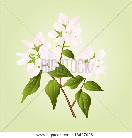 Branch decorative shrub nature background vector illustration