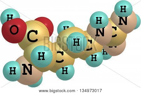 A model of an amino acid arginine. Arginine has an important function in the immune system wound healing and cell division. 3d illustration