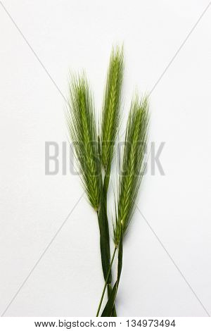 Isolated Green Spikelet