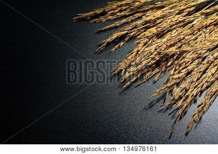 Paddy jasmine rice on dark background with hard light, luxury paddy rice style