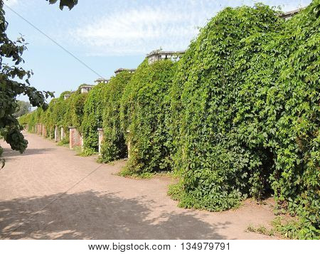 wall covered with green foliage blue sky