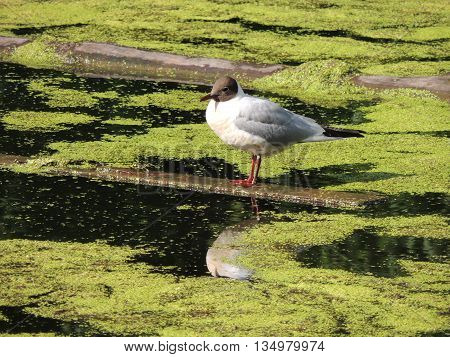 a bird sitting on a wooden plank in the water