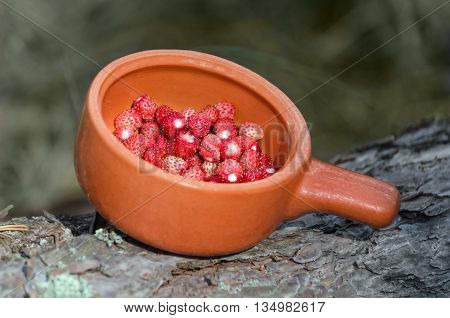 Strawberries in a ceramic bowl standing on a fallen log in the forest