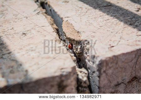 Ladybird hiding inside a crack in stone wall on a sunny spring day in Israel.