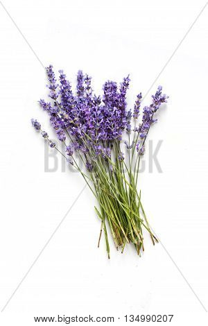 Lavander fresh flowers bouquet on white background