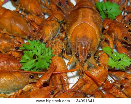 some boiled crayfish with green parsley closeup
