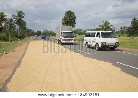 ANURADHAPURA SRI LANKA - MARCH 13, 2015: Drying of harvested rice on the carriageway of the road. Agriculture in Sri Lanka