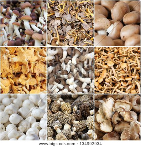 Fresh mushrooms sold on the market collection