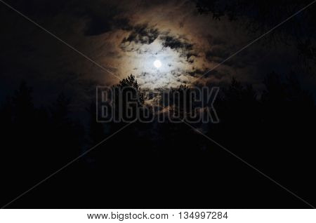 full moon over the forest South Bohemia Czech Republic