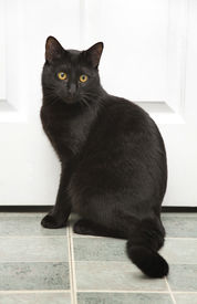 picture of black cat  - beautiful domesticated black cat waiting by the door - JPG