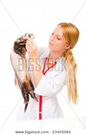 Young Eterinarian Examines A Patient Ferret