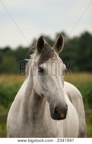 Curious Gray