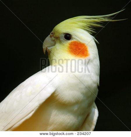 7093 Parrot