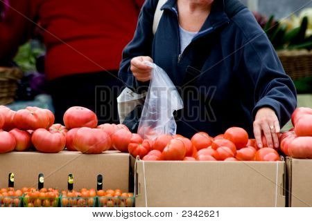 Picking Fresh Vegetables