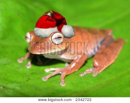 Rana de Navidad!