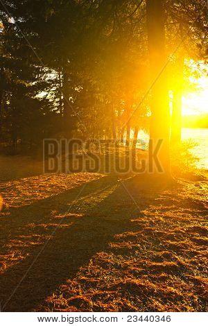 Sunshine In Evening Forest Near Lake