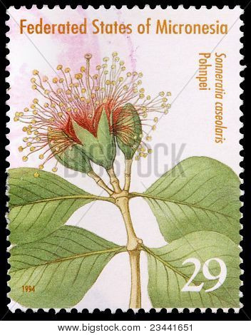 A 29-cent Stamp Printed In The Federated States Of Micronesia
