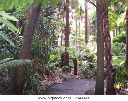 Melbourne Botanic Gardens Fern Gully Path