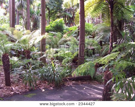 Melbourne Botanic Gardens Fern Gully Pathway