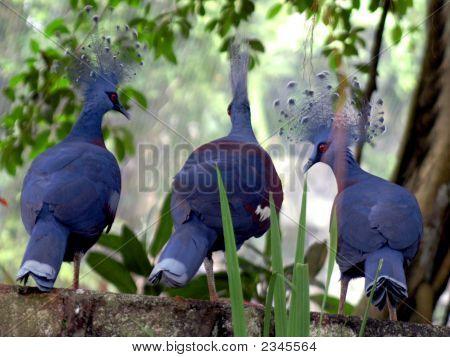 Unusal Peacock Type Bird Malaysia