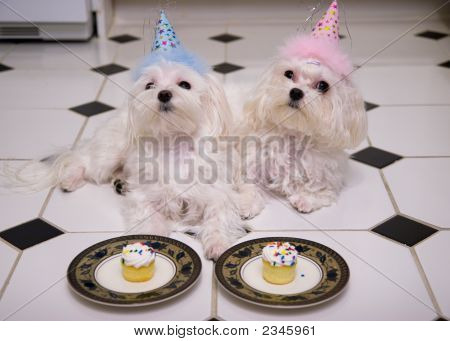 Happy Birthday Doggies!